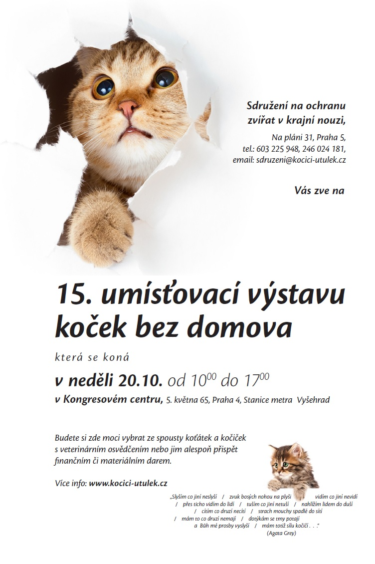 Vystava kocek_2013